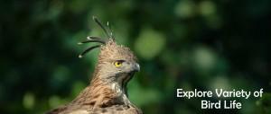 Explore the Variety of Bird Life at Tadoba Andhari Tiger Reserve