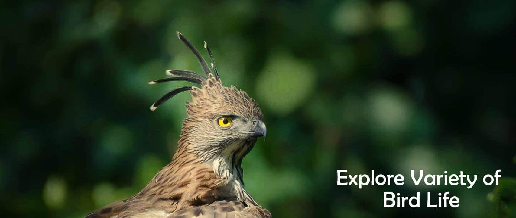 Explore the Variety of Bird Life at Tadoba Andhari Tiger Reserve
