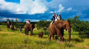 elephant-reserves-in-india