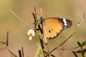 large_Butterfly_102