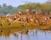 Tadoba Wildlife Safari