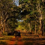 welcome to the tadoba national park
