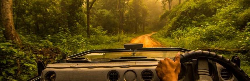 Tadoba Andhari National Park Safari Booking