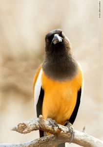 bird in tadoba national park