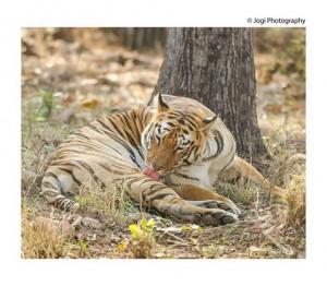 Tadoba-Andhari-Tiger-Reserve