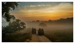 Enjoy the Tadoba Landscape