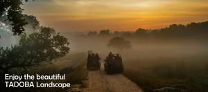 Enjoy the Tadoba Landscape