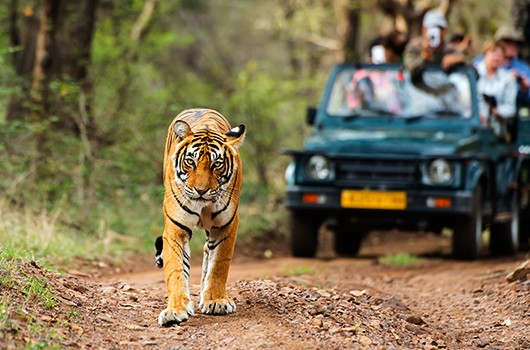 points to know prior to going for an Indian national park