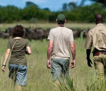 African_Safari_Walking_Safari-960x350